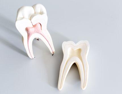 根管治療/歯内療法